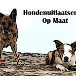 Hondenuitlaatservice Op Maat